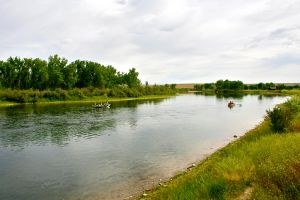 22 bighorn river trout fishing