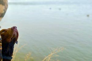 1 Best Waterfowl Hunting in Montana
