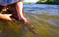 07 best trout fishing river