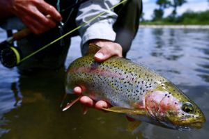 31 Best Fly Fishing Lodge for Trout