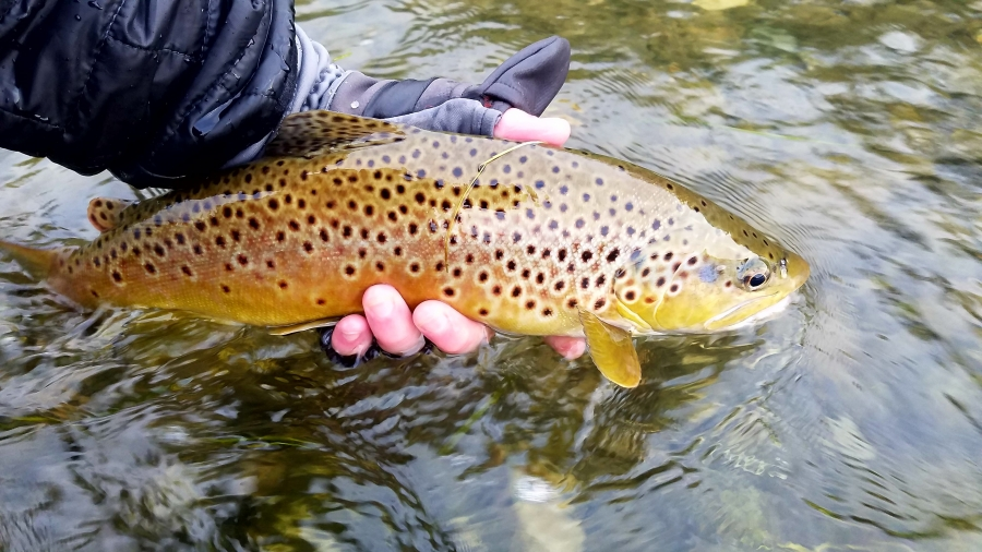 Beautiful brown on a white/grey streamer