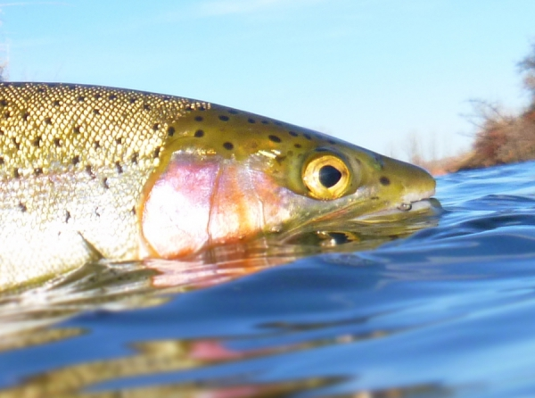 Great Dry Fly fishing